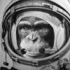 gen cero primates